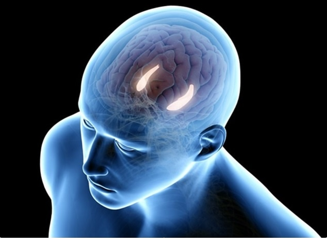 The limbic system compiles long term memories and self diagnosis.